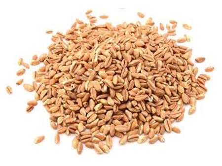 полба зерно